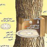 ساختار آوند چوبی و آبکش در درخت