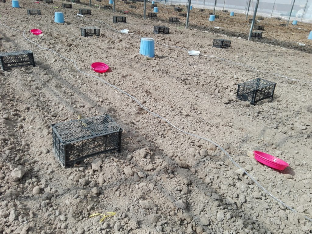 مراحل ضدعفونی خاک با متیل بروماید