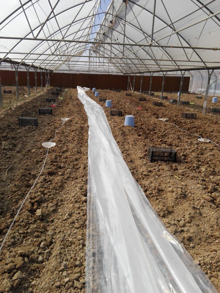 پوشاندن خاک با پلاستیک برای ضدعفونی خاک متیل برومیاد