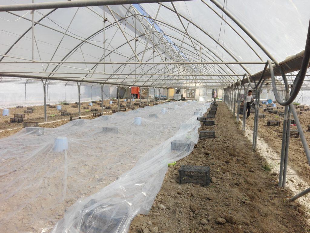 پلاستیک کشی ضدعفونی خاک متیل برومیاد