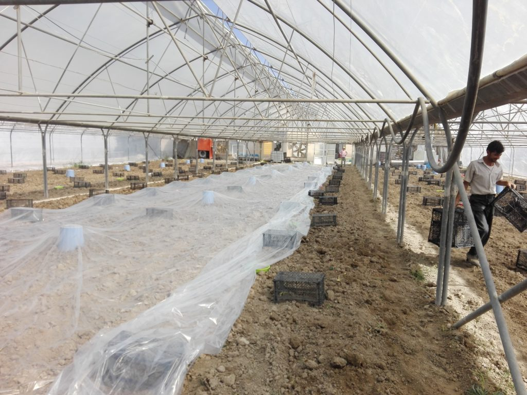 پوشاندن خاک با پلاستیک برای ضد عفونی خاک متیل برومیاد