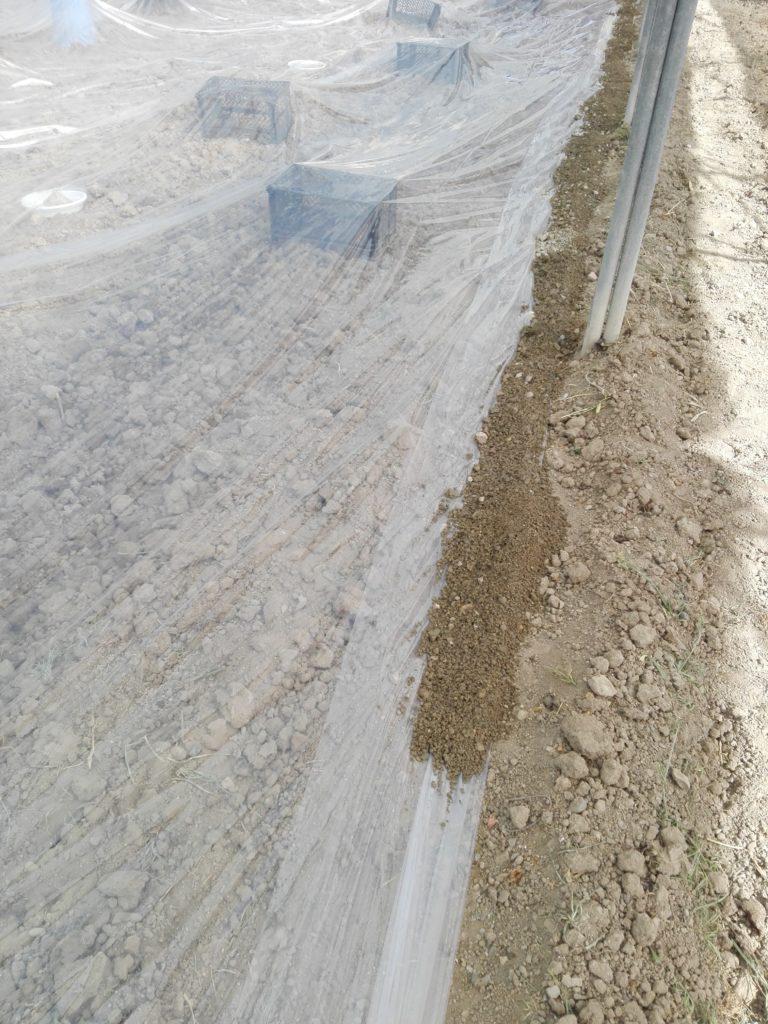 خاک ریختن اطراف پلاستیک برای ضد عفونی خاک متیل بروماید