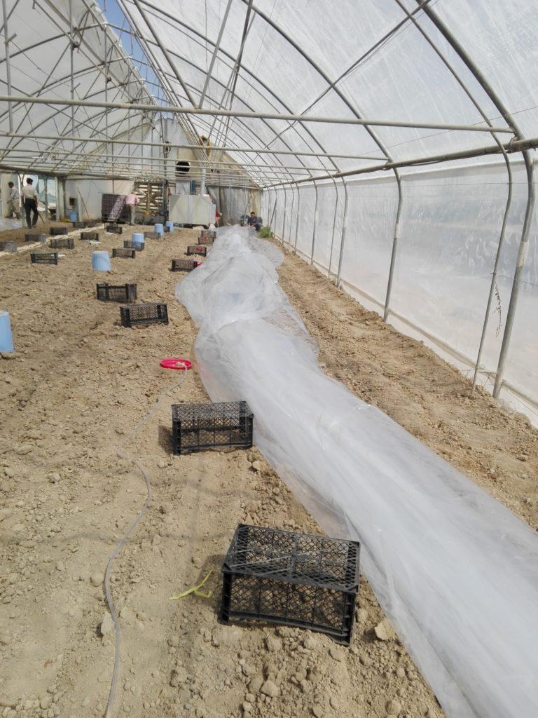 پلاستیک کشی خاک برای ضدعفونی خاک متیل برومیاد