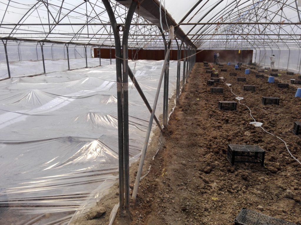 پوشاندن خاک برای ضد عفونی خاک متیل برومیاد