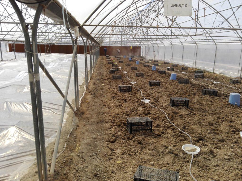 پوشاندن خاک برای ضدعفونی خاک متیل برومیاد